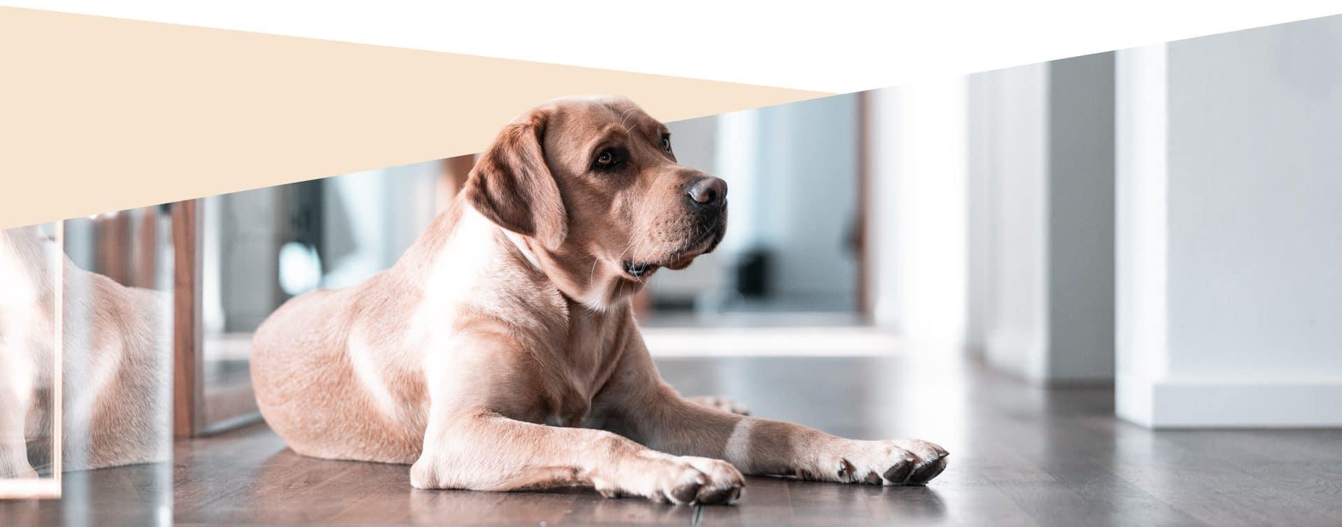 Hund in der Beratung in München
